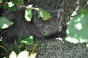 ajax kitten boo