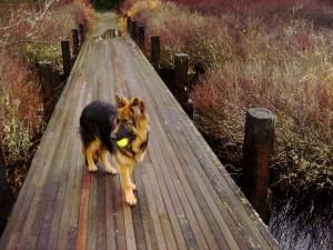 zippy ball bridge
