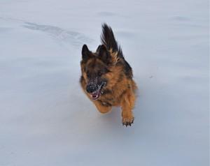 Zippy Snow Run