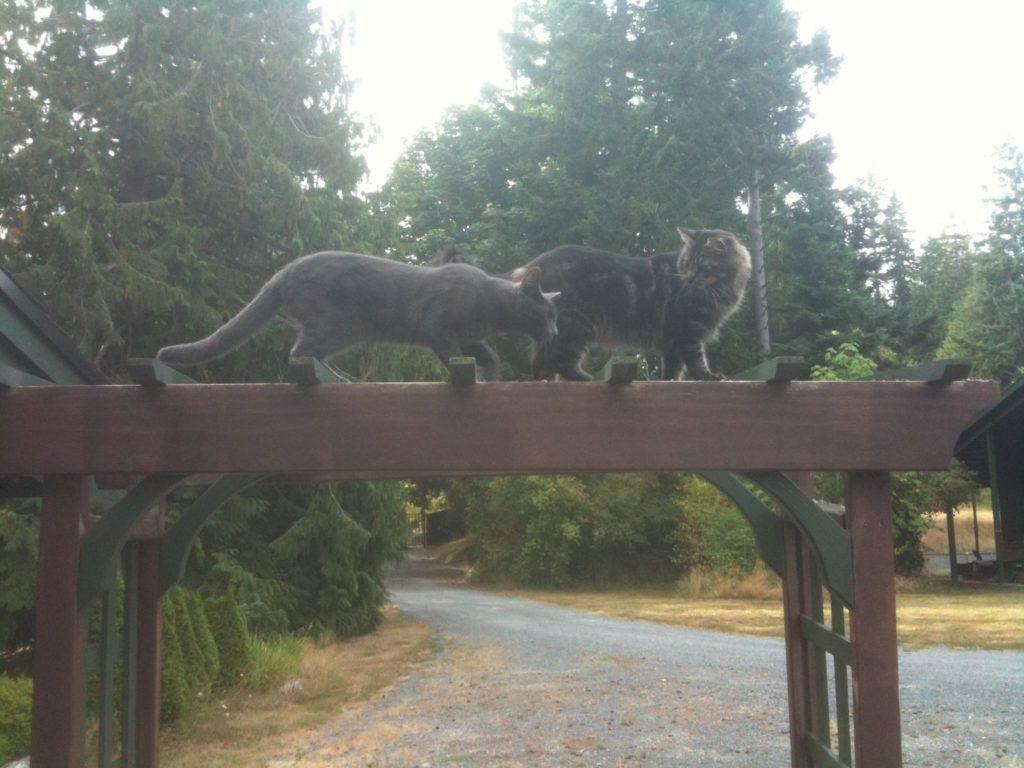 trellis cats 1